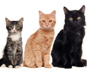 Happy Pet - effetti collaterali - controindicazioni