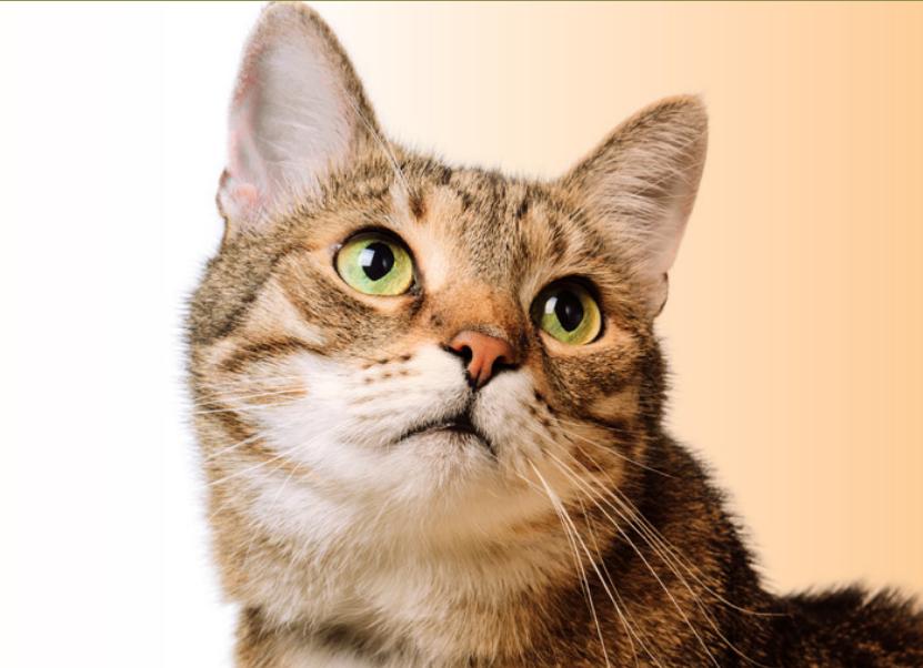 Happy Pet - ingredienti - composizione - funziona - come si usa?