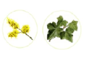 Varikos - composizione - ingredienti - come si usa? - funziona