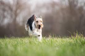 Good Doggie - ingredienti - come si usa? - composizione - funziona