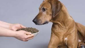 Good Doggie - sito ufficiale - Italia - originale