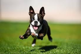 Good Doggie - amazon - prezzo - dove si compra? in farmacia