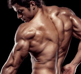 X-Muscle - ingredienti - come si usa - composizione - funziona
